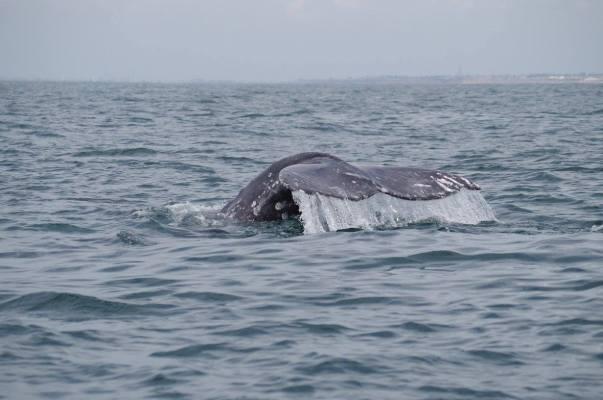 socalwhale